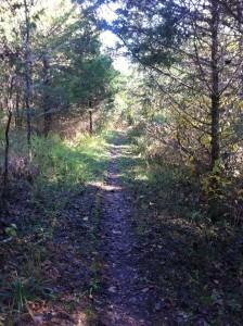 Lobo Pic - View of Hobbit Trail